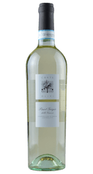Pinot Grigio - Corte Olivi - Venetien - Italien | 2019 | Lenotti | Italien